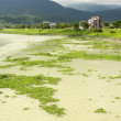 Contaminated overgrown river — Stock Photo