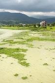 Förorenade igenvuxna floden — Stockfoto