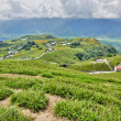 campagna in hualien — Foto Stock
