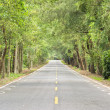 Road at forest — Foto de Stock