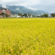 Stock Photo: Golden rural scenery