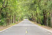 Road at forest — Stock Photo