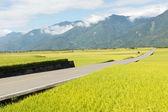 Road in rural — Stock Photo