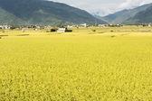 Idyllic rural scenery — Stock Photo