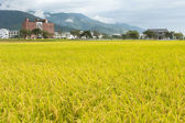 Golden rural scenery — Stock Photo