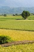 Altın kırsal manzara — Stok fotoğraf