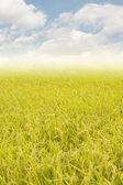 Golden rural scenery — Stock Photo