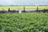Giardino nel villaggio — Foto Stock