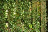 Leaf pflanzen über holz-zaun — Stockfoto