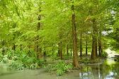 Wald in hualien — Stockfoto