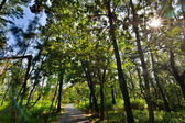 Taitung waldpark — Stockfoto
