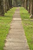 Walkway in Park — Stock Photo