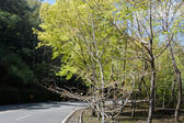 Green tree in spring with road — Stock Photo