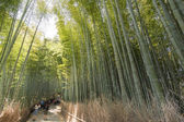 Bamboo forest path — Stock Photo