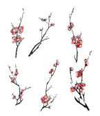 Plum blossom branches — Stock Photo