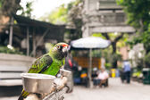Parrot stand at the bird street — Stock Photo
