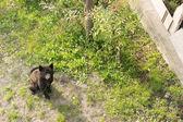 黑犬 — 图库照片