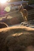 Deers in Nara park — Stock Photo