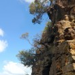 Blue Mountains : Trees on high rock — Stock Photo