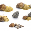 Collection of shells, stones and sand isolated on white — Stock Photo #3866771