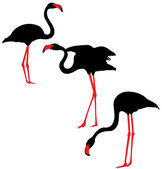 Flamingo Silhouettes — Vector de stock