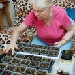 Woman takes care of the seedlings in the home — Stock Photo #21299773