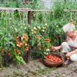 Mistress of a kitchen garden received harvest — Stock Photo