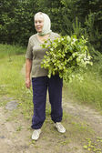 Mature beautiful woman prepares birch brooms — Stock Photo