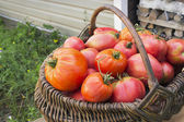Red tomatoes in a wicker basket — Stock Photo