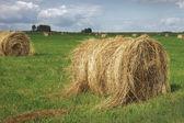 Straw bales on field — Stock Photo