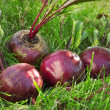 Several washed beet lies on the green grass — Stock Photo #38980423