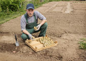 Happy farmer is preparing to plant potatoes — Stock Photo