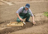 Happy farmer manually put the potatoes in the furrow — Stock Photo