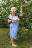 Mature Summer Resident in the garden with apples — Stock Photo