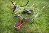Wheelbarrow with grass and petrol trimmer — Stockfoto
