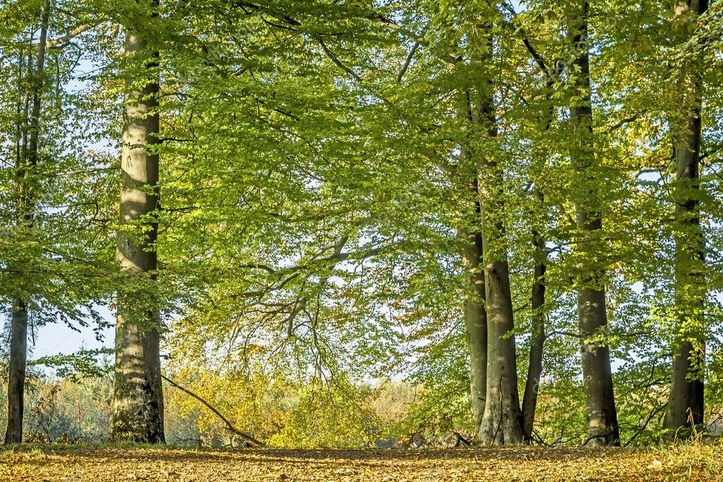 An image of a nice autumn trees background — Stock Photo #12969531