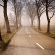 Road with trees — Stock Photo