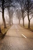 Ağaçlar olan yol — Stok fotoğraf