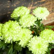 Green and white flowers — Stock Photo