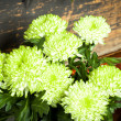 Green and white flowers - ストック写真