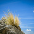 Stone grass blue sky — Stock Photo