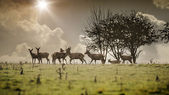 Some deer — Stock Photo