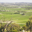 barossa valley — Stock Photo