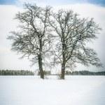 Winter tree — Stock Photo #20349937