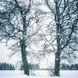Winter tree — Stock Photo #20349975