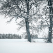 Winter tree — Stock Photo #20349995