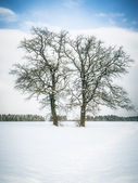 Winter Baum — Stockfoto