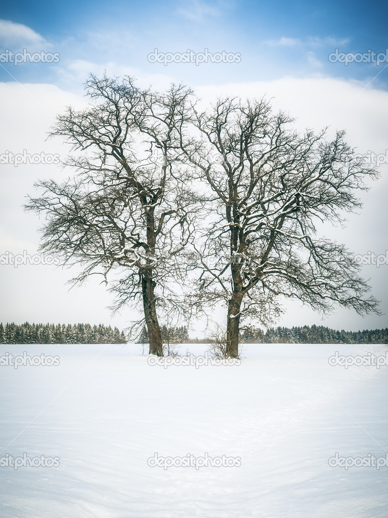 An image of a nice winter tree — Stock Photo #20349937