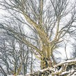 Winter tree — Stock Photo #20407397