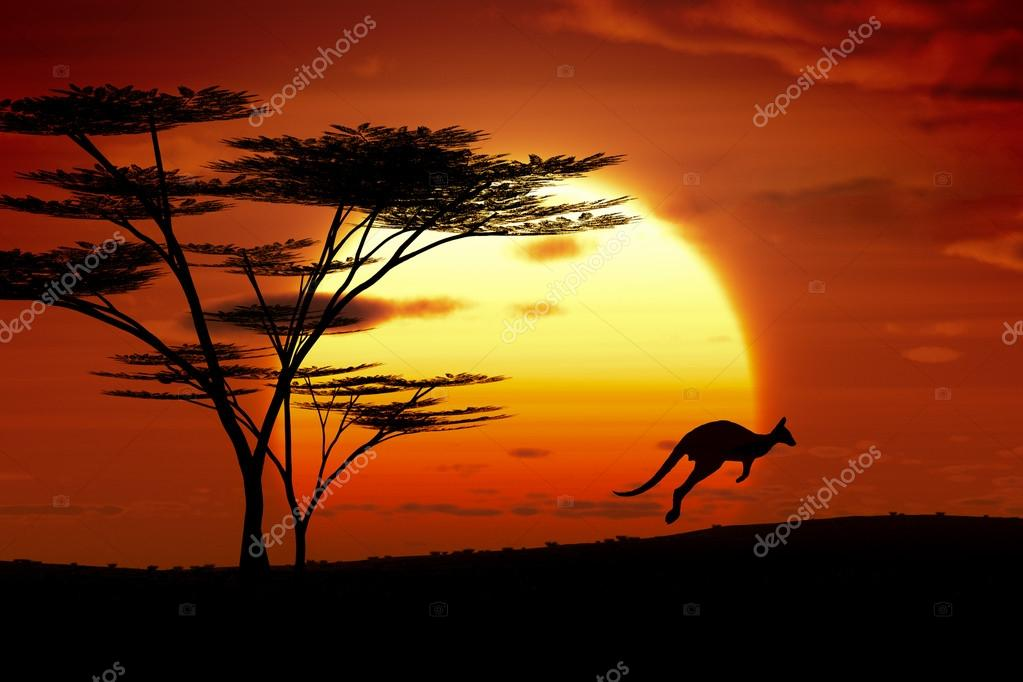 A jumping kangoroo at sunset in Australia  Stock Photo #21150103